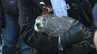 Happy Groundhog Day 2020! Murmeltier sagt das Wetter voraus