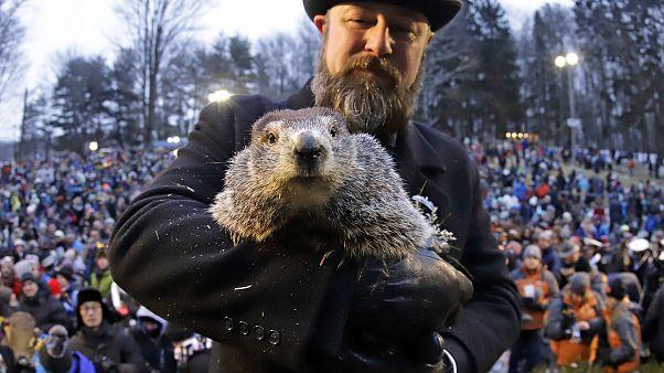 L'ultracentenaria tradizione americana del giorno della marmotta