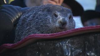 Spring will come earlier this year, says groundhog Phil