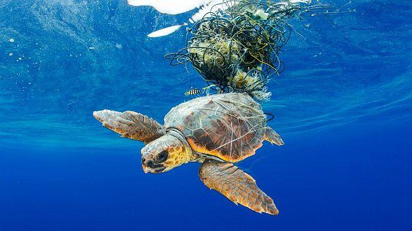 Denizaltı fotoğraf yarışması okyanuslardaki plastik kirliliğini gözler önüne serdi