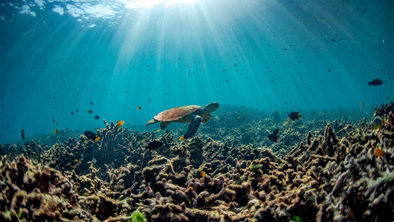 Ведет ли закисление океана к непредсказуемым последствиям для экосистем?