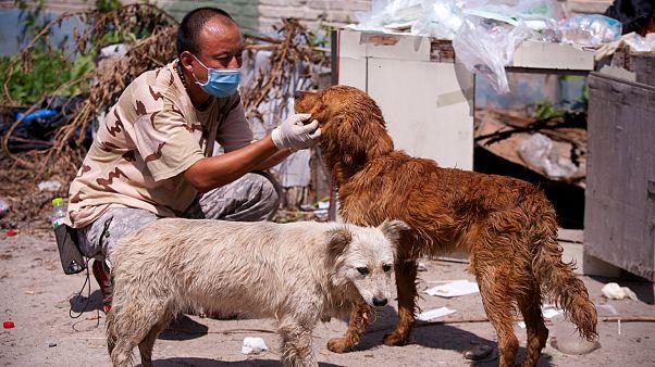 Koronavirüs: On binlerce evcil hayvan açlıktan ölme riskiyle karşı karşıya