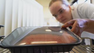 Smells fishy: researchers develop 'sniff chips' to combat food waste