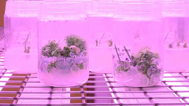 Flores, vermes e estrume ajudam a reter poluentes de águas