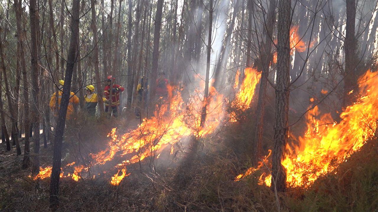 Mit Kettensägen, Feuer und Ziegen gegen Waldbrände in Portugal