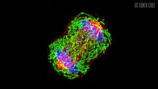 فيديو: دراسة تكشف عن كيفية تشكل الأورام السرطانية