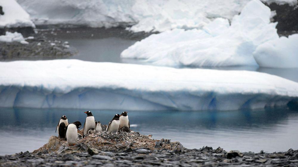 Lubang ozon Antartika adalah salah satu yang terbesar dalam catatan, bagaimana pengaruhnya terhadap saya?
