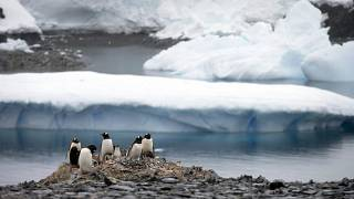 In this Jan. 22, 2015 file photo, Gentoo penguins stand on rocks near the Chilean station Bernardo O'Higgins, Antarctica.