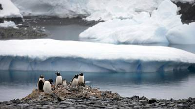 Antarctic ozone holes are not just a matter of UV radiations for penguins and algae, but its impacts are not yet fully understood.