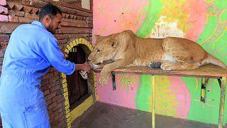 حديقة حيوانات صنعاء