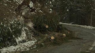 Romania: il maltempo devasta la foresta di Prahova