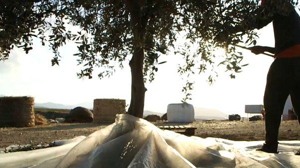À Chypre, deux associés issus de chaque côté de l'île font vivre un projet bicommunautaire