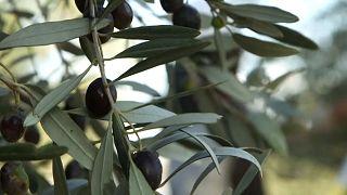 """Zypernkonflikt: """"Öl für den Frieden"""""""