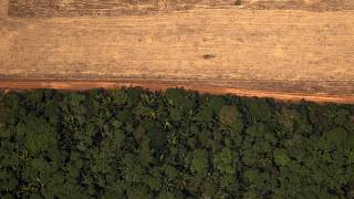 Kétszer annyi esőerdőt vágtak ki januárban Brazíliában, mint egy évvel korábban