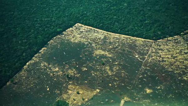 Egyre több esőerdőt vágnak ki Brazíliában