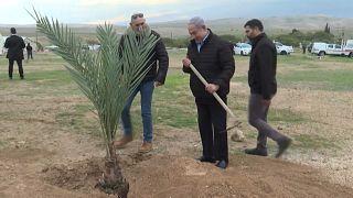 رئيس الوزراء الإسرائيلي بنيامين نتنياهو يزرع شجرة في مستوطنة إسرائيلية في غور الأردن