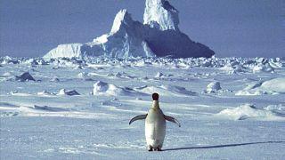 موسم الصيف في شمال القارة القطبية الجنوبية، بلغت درجة الحرارة ما يقرب 18.3 درجة مئوية