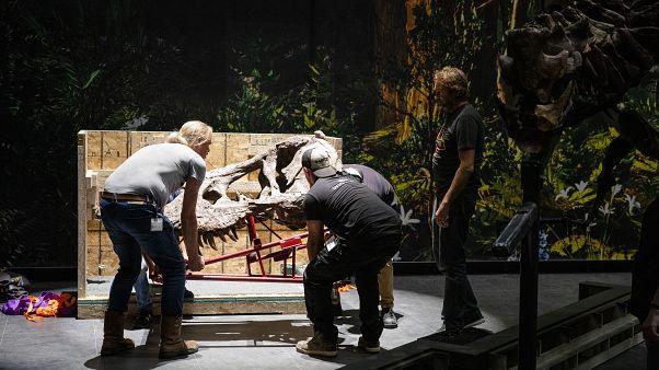 إعادة تشكيل هيكل تيرانوصور في متحف/ صورة توضيحية من الأرشيف