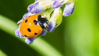 Araştırma: Yarım milyon canlı türü yok olma tehlikesiyle karşı karşıya, çoğunluğu böcek