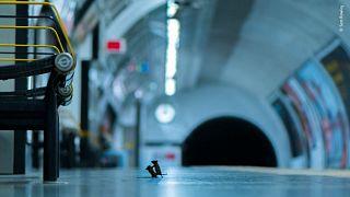 Díjazott természetfotó: napokig vadászott a civakodó egerekre