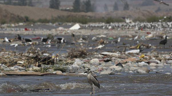 El río Chillón de Lima excede en 12 veces los límites de contaminación