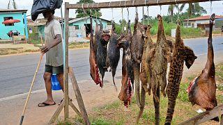 تجارة لحوم الخفافيش والجرذان والأفاعي منتعشة في إندونيسيا رغم المخاوف من فيروس كورونا