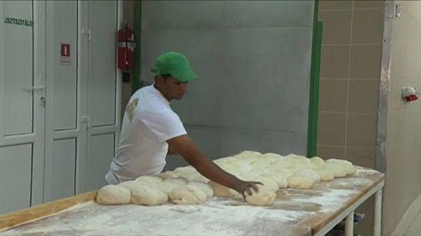 Még több külföldi pék érkezik Ditróra