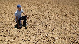 مزارع في جنوب إفريقيا التي ترزح تحت وطأة أسوأ موجات الجفاف منذ عقود