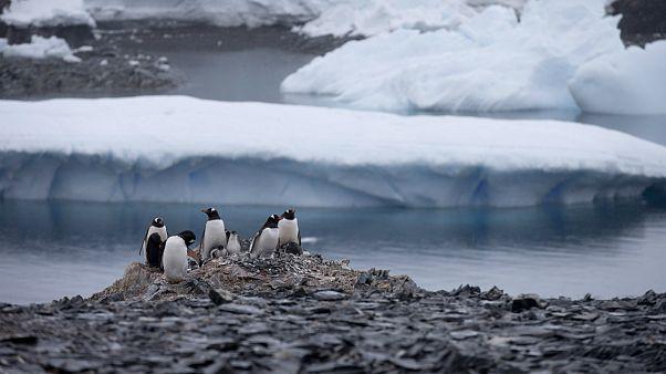 برای اولین بار در جنوبگان دمای بیشتر از ۲۰ درجه ثبت شد
