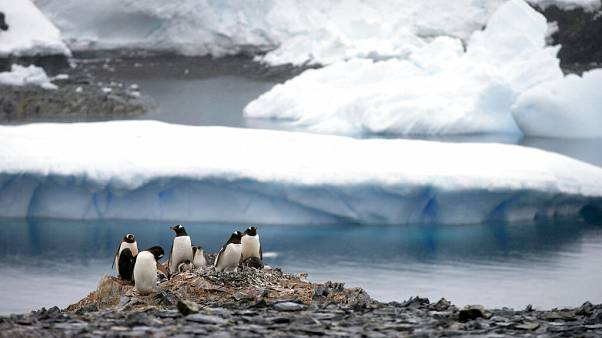 Gentoo penguins stand on rocks near the Chilean station Bernardo O'Higgins, Antarctica.