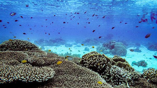 Mercanlıklar