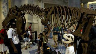 الأرجنتين: علماء يكتشفون بقايا نوع جديد من الديناصورات الصغيرة