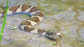 Yılanların yıllık çiftleşme dönemi için toplandığı park kısmen kapatıldı