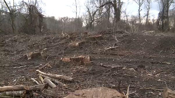 Trotz EU-Naturschutz: 90 Jahre alter Wald abgeholzt