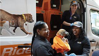 جرو تم انقاذه  من قبل منظمة أي أس بي سي أي ولاية نيويوك- الولايات المتحدة
