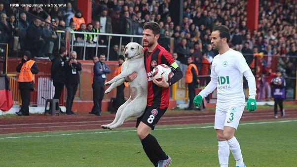سگ بازیگوش زمین فوتبال را  به هم ریخت