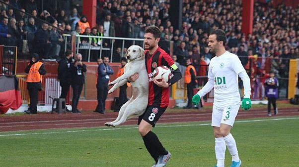 لاعبون يخرجون الكلب الظريف الذي غلبه الحماس لتنفيذ ضربة حرة