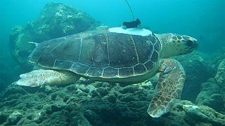 Así es como las tortugas nos ayudan a predecir ciclones