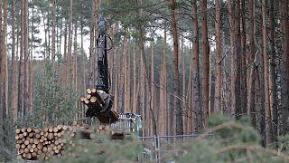 Se apilan troncos de pino en el futuro sitio donde Tesla va a construir su primera fábrica en Europa. Foto de archivo tomada el 17 de febrero de 2020.