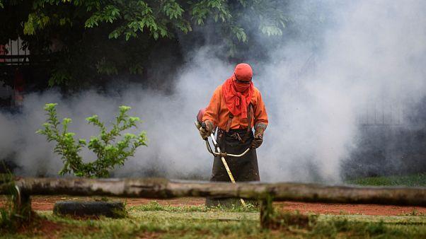 Un trabajador municipal corta la hierba durante una operación de fumigación contra el mosquito que puede propagar el dengue- en San Lorenzo, Paraguay,