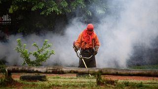 La lotta silenziosa del Sud America contro la dengue: impennata di casi nel 2019