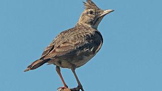 کشف پرنده یخزده در سیبری ۴۶ هزار سال بعد
