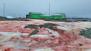 La base Akademik Vernadsky rodeada de nieve roja