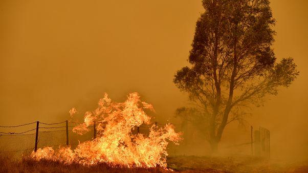 Avustralya'daki yangınlarda ülkedeki ormanların beşte biri yok oldu