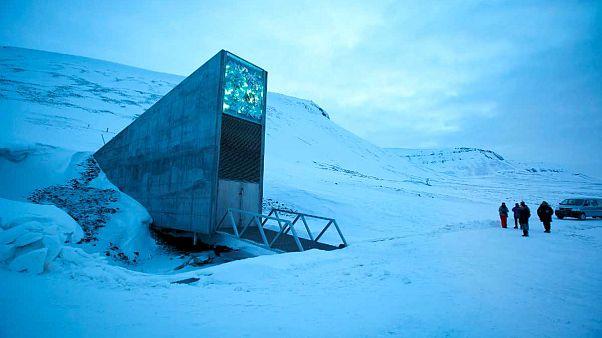 Olası kıyamet senaryosuna karşı Norveç'teki 'Nuh'un Gemisi'ne 60 bin bitki tohumu taşındı