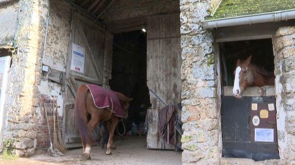 مربو الخيول بفرنسا في قلق بسبب ضريبة القيمة المضافة بعد بريكست