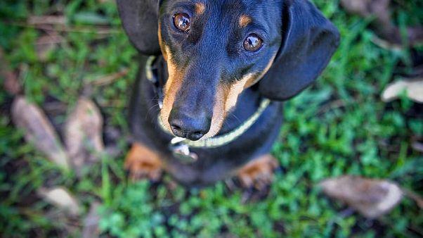 خوردن سگ و گربه در شهر شنژن چین ممنوع اعلام میشود