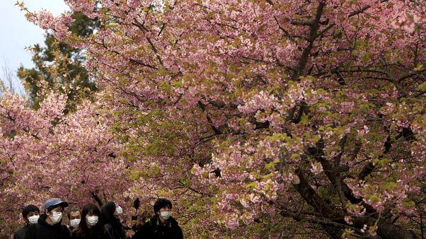 Des japonais portent des masques sous des cerisiers en fleurs à Matsuda au Japon le 29 février 2020