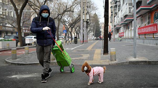 تسجيل أول إصابة لكلب بفيروس كورونا الجديد