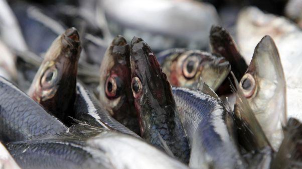 Рыбаки осложнят торговые переговоры ЕС и Британии